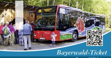 Sommer – Igelbusse fahren ab Mitte Mai