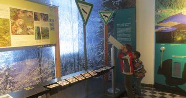"NaturparkWelten Ausstellung ""König Arber"". Foto: Archiv Naturpark"