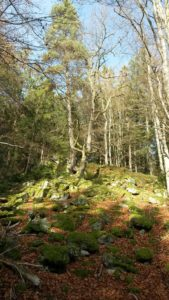Wald bei Thurmansbang