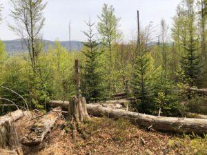 Waldwildnis im NP, Foto Peter Auerbeck
